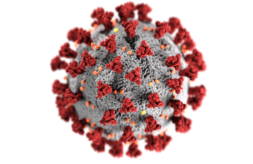 Illustration showing the ultrastructural morphology exhibited by coronaviruses